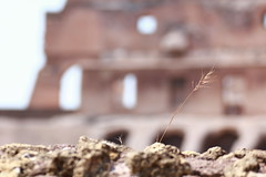 Colosseo (Giovanni Gentili) Tags: summer italy roma love photo pic best colosseum passion ever colosseo outstanding romaluglio2012550d