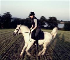 schneller als der wind. (juhlsofficial) Tags: mountain julia feld fast pony welsh kappeln schlei galopp racker