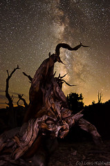 Monster Tree (Olancha Peak) Tags: nightphotography whitemountains bristlecone milkyway bristleconepine inyonationalforest lorihibbett