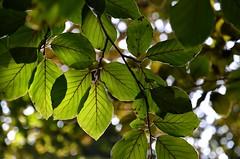 (ClinkzZ) Tags: green nature nikon afsdxnikkor1685mmf3556gedvr d5100