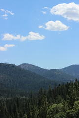 8/18/12 (StaceyCDDN) Tags: mountains nature beauty pine shasta hayfork californiamountains hayforkca
