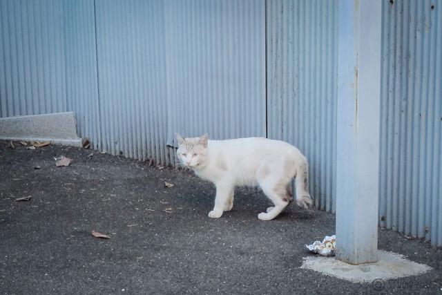 Today's Cat@2012-08-22