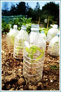 invernadero botellas