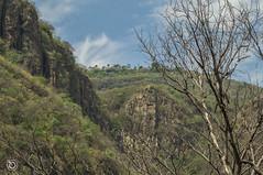 DSC03248 (Braulio Gmez) Tags: barrancadehuentitn biodiversidad caminoamascuala canyon canyonhuentitan faunayflora floresyplantas guadalajara jalisco mountainrange naturaleza sierra senderismo paisaje barrancadehuentitn barranca huentitn ixtlahuacandelro mxico guardianesdelabarranca