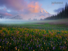 Grand Park on Mt Rainer ! (kevin mcneal) Tags: washington washingtonstate pacificnorthwest mountrainiernationalpark nationalpark mtrainier cascademountains grandpark mountains wildflowermeadows sunset clouds weather trails hiking wildflowerhikes washingtonstatetrails highestmountainofthecascaderange pacificnorthwestwildflowerhikes mountainsofthepacificnorthwest nearseattle mostprominentmountaininthecontigiousunitedstates volcano glaciers glacierice washingtonstatenationalparks tourism walkingtrails summerhiking washingtontourism kevinmcnealphototours nikon nikond800kevinmcneal kevinmcneal kevinmcnealphotography kevinmcnealphotographyphotographytours nikond810 singhrayfilters