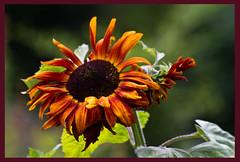 AH62_8158 (der_andyrandy) Tags: blumen blte flowers amazingamazing thisphotorocks canoneos7d macro luckyorgood