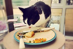Lesson #1 - Not to leave the cat unattended with your dinner! (walters_lowri) Tags: 1