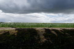 View from the trenches of the Somme (Richard Buckley) Tags: somme centenary picardy france battle war memorial poppies field corn scene view statue soldier basilica cross headstone grave greatwar worldwar1 caribou troops irish newfoundland australian shell artillery cemetery trench ceremony