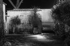 Potted Palms (John fae Fife) Tags: pots night lowlightphotography villeneuvelsbziers nb nightscene longexposure nightphotography noiretblanc monochrome palms cabin blackandwhite france languedocroussillon lowlight bw