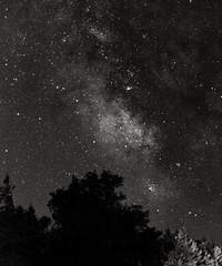 Milky Way Over Evergreens B&W (LJS74) Tags: milkyway stars sky evergreens landscape nature longexposure blackandwhite bw monochrome fingerlakes space