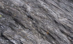 platy! (khasut) Tags: denalinationalpark horseshoelake metamorphism schist slatycleavage