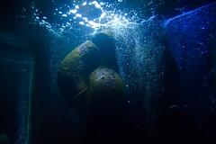Underwater (Vasilis R.) Tags: photography photo photooftheday photographer photos water wasser see drops magic nature natur excellent capture nikon nikonflickraward nikond3300 blue flickr beauty beautiful light soe ngc amazing