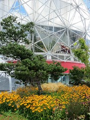 Science World's green roof (Ruth and Dave) Tags: scienceworld greenroof vancouver rudbeckia blackeyedsusan pine tree dome reflection