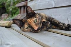 bubbles; (sean_o_connire) Tags: cat garden chararcter bubbles summer outside pet