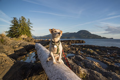 Hans along the Alaskan coast (brudy0918) Tags: jackrussell terrier alaska ketchikan