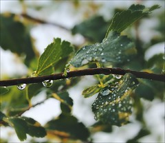 Our Daily Challenge: Repetition (Sue90ca Tornados Hit Just South Of Here) Tags: canon 6d odc repetition raindrops