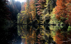 Lonely lake in autumn... (JohannesMayr) Tags: see reflections spiegelung allgu bayern bavaria deutschland germany herbst autum laub lake leaves spiegel bunt rot braun