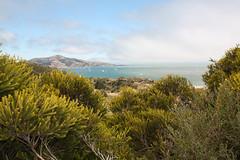 Bay Area. (hhmare!) Tags: sanfrancisco bayarea sausalitos canon roadtrip california usa fog