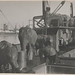 Elephants being unloaded from ship at Port Adelaide