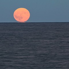 Harvest  Moonrise... #ILovePhotography (elatawiec62) Tags: ilovephotography