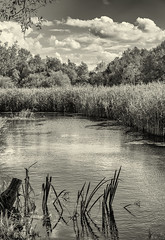 Oxford / England: Lake and reeds, right beneath Oxford Canal
