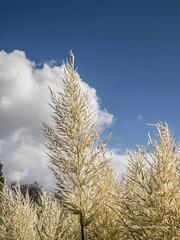 Clyne Gardens 2016 09 30 #17 (Gareth Lovering Photography 3,000,594 views.) Tags: clyne gardens botanical swansea wales flowers trees shrubs park olympus stylus1s garethloveringphotography