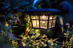 Garden Light (Evan's Life Through The Lens) Tags: camera sony a7s lens glass 50mm f18 vibrant blue green orange dark gloomy clouds weather sky garden trees home light beautiful bright nature fall autumn