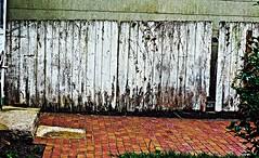 The Back Yard (Professor Bop) Tags: professorbop drjazz olympusem1 backyard stoningtonboroughconnecticut fence walkway brick decay