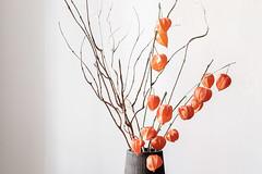 physalis (edelstoff.de) Tags: orange physalis