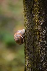 Steep Climb (Giulia.Mazzoni) Tags: tree climb albero muschio lumaca corteccia