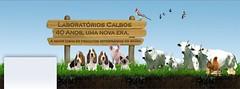 Time Line - Fecebook - Calbos 1