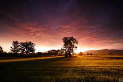 this morning inferno - a roller coaster of emotions (gregor H [PRO EX]) Tags: morning tree reed clouds sunrise landscape austria shadows rheintal gloaming lauterach carlzeiss vorarlberg zf distagont3518 zeissphk12