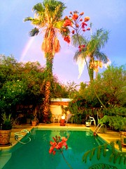Reds, Golds, and Greens Create A Lush Tropical Desert Paradise (chicbee04) Tags: flowers summer pool arcoiris rainbow paradise desert exotic golds monsoon greens tropical create lush reds 2012 flowerpots tucsons a