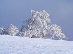Zuhaitz izoztua / frozen tree (Mendiakbide) Tags: snow euskalherria basquecountry elurra ireber basaburua ernaitzu iakbide
