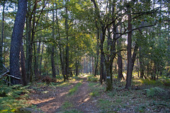 Thse-la-Romaine (Loir-et-Cher). (sybarite48) Tags: las france forest bosque bos wald floresta fort foresta loiretcher orman      thselaromaine