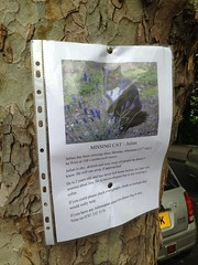 Julian's lost (louise_a) Tags: london lostcat camberwell se5