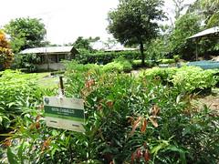 Plantas de SOtacaballo