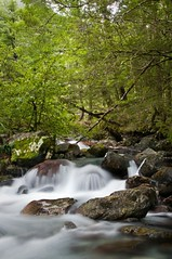 Beech forest Stream (Chook with the looks) Tags: lakerotoiti