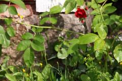 Ser du mig? (Yvonne L Sweden) Tags: summer insect sweden bee insekt bi sommar