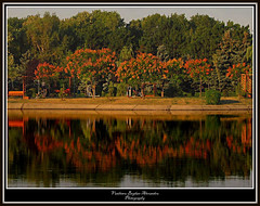 summer reflections (Ploiesti) (V Bogdan) Tags: park trees summer orange reflection verde green water europe romania apa parc prahova ploiesti vara portocaliu reflexii salasporturilor mygearandmeplatinum flickrsfinestimages1