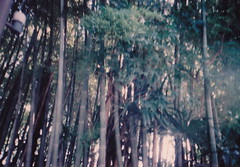 (risaikeda) Tags: tree green film nature lomo lomolca bamboo bushes
