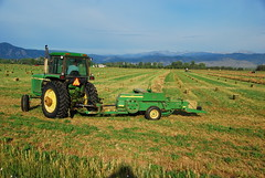 Making horse and cow food (Let Ideas Compete) Tags: county tractor green field john yummy colorado yum farm farming machine boulder delicious machinery co hay agriculture bales bale deere baler bailer baling