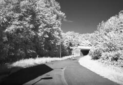 infrared first roll (jojonas~) Tags: rollei gteborg ir gothenburg infrared skater jupiter12 4am kiev 400s hisingen