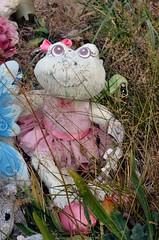 Froggy (runran) Tags: cemeteries cemetery grave graveyard yard toy bc britishcolumbia frog vancouverisland stuffedanimal duncan froggy gravemarker stannschurch quamichan