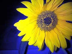 flower macro zeiss handy lens favoriten nokia photo... (Photo: eagle1effi on Flickr)