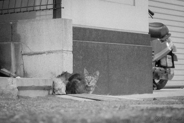 Today's Cat@2012-08-20