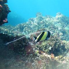 IMG_6652 (d3_plus) Tags: snorkeling freediving izu g12    togai hirizo    nakagi canonpowershotg12  is04