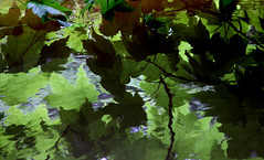 Reflections II (GillK2012) Tags: nature summer leaves reflection river rippling abstract patterns water