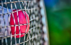 Bye Bye Birdie (Jason _Ogden) Tags: racquets d90 birdie stroke macro byebyebirdie cork nikon summerolympicsports vr18200 shuttlecock macromondays badminton strings jasonogdenphotography
