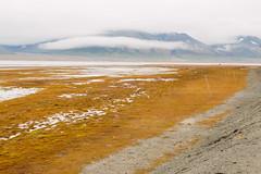 Arctic Tundra VII (danielfoster437) Tags: adventure arctic arcticcircle arcticsummer arctictundra extremeterrain landscape mountain nature outdoors spitsbergen summer svalbard svalbardsummer terrain tundra wilderness